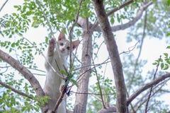 Обезьяна кота Стоковое Изображение RF