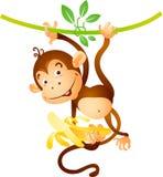 обезьяна лианы стоковые фотографии rf