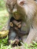 Обезьяна младенца обнимает маму Стоковое Изображение