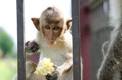 обезьяна младенца Стоковое Изображение