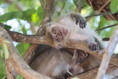 Обезьяна младенца на дереве Стоковое Изображение