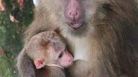 обезьяна младенца акции видеоматериалы