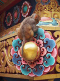 Обезьяна на виске Стоковая Фотография