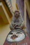 Обезьяна на голове Стоковая Фотография RF