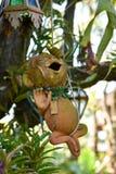 Обезьяна на дереве в природе Стоковые Изображения
