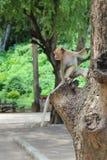 Обезьяна на дереве Стоковые Фотографии RF