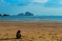 Обезьяна на красивом пляже Ao Nang, Krabi, Таиланде Стоковые Фото