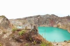 Обезьяна на озерах кратер Kelimutu Стоковое фото RF
