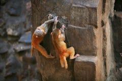 обезьяна непослушная стоковое фото rf