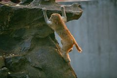 обезьяна непослушная стоковое изображение