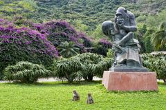 обезьяна острова nanwan Стоковые Фотографии RF