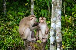 обезьяна одичалая Стоковая Фотография