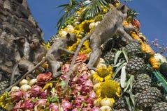 обезьяна пиршества Стоковые Фото