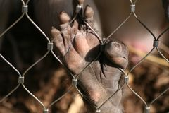 обезьяна руки Стоковые Фото
