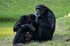 обезьяна семьи Стоковое Изображение RF