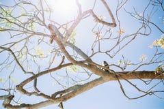 Обезьяна сидя на деревьях во время лета стоковая фотография rf