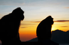 Обезьяна силуэта в горах Стоковая Фотография RF