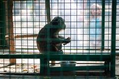 Обезьяна сидя в клетке Стоковое фото RF