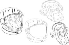 Обезьяна слушая музыку в шлеме велосипеда в современном шлеме гонщика также вектор иллюстрации притяжки corel - Архив вектора бесплатная иллюстрация