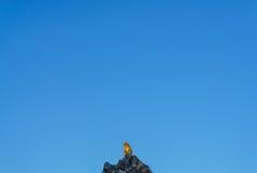 Обезьяна с голубым небом на холме стоковое изображение rf