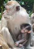 обезьяна с ее маленьким Стоковые Изображения