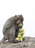 обезьяна тайская стоковая фотография rf