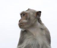 обезьяна тайская Стоковая Фотография