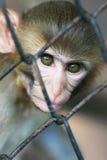 обезьяна тюрьмы стоковые фотографии rf