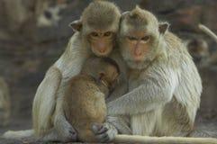 обезьяна 12 Стоковые Фото