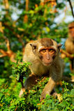 обезьяна Стоковое Изображение
