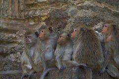 обезьяна 14 Стоковое Изображение