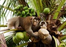 обезьяна Стоковые Фотографии RF
