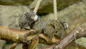 2 обезьяны белки сидя в зоопарке акции видеоматериалы