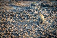 Обезьяны в Таиланде на его природе стоковое изображение rf