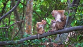 Обезьяны в тропическом лесе сидят на ветви акции видеоматериалы