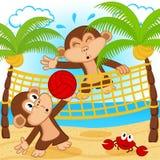 Обезьяны играя в волейболе пляжа Стоковое Изображение RF