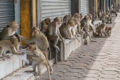 Обезьяны на улице в тайском городе Стоковое Изображение RF