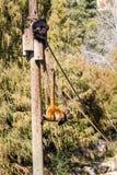 2 обезьяны паука в зоопарке Иерусалима библейском, Израиле Стоковые Фото