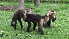 Обезьяны, приматы, животные зоопарка, живая природа, природа сток-видео