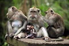 обезьяны семьи стоковое фото
