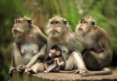обезьяны семьи стоковые фотографии rf