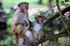 обезьяны семьи стоковая фотография