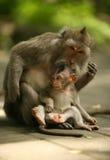 обезьяны семьи стоковые изображения