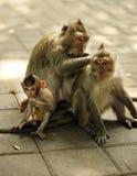 обезьяны семьи стоковое изображение