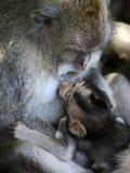 обезьяны семьи стоковое изображение rf