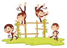 обезьяны Стоковые Изображения RF