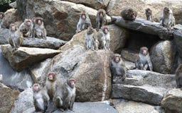 обезьяны Стоковые Фото