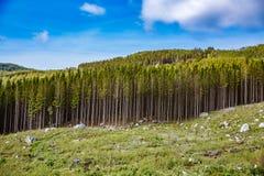 Обезлесение в Норвегии стоковое изображение