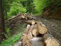Обезлесение в Румынии 2015 стоковая фотография rf
