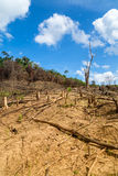 Обезлесение в Филиппинах стоковое фото